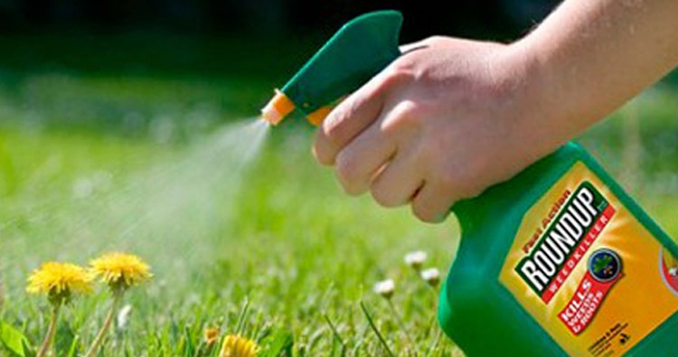 Which Insecticide Is Most Effective?