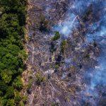Fires in the Amazon TheForbiz