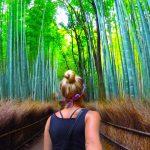 bamboo-forest-theforbiz